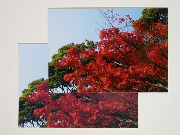 SiSO-LAB☆EPSON写真用紙、発色良好でオススメ