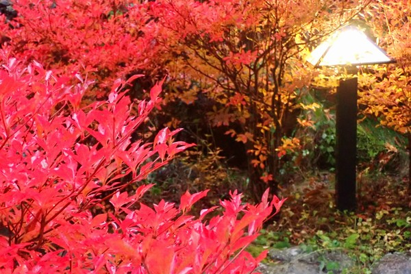 SiSO-LAB☆OLYMPUS TG-5で雨の中紅葉撮影。