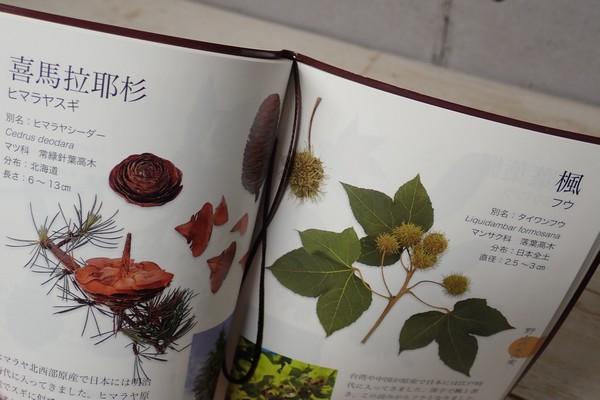 SiSO-LAB☆子どもと一緒に!ポケット版 木の実さんぽ手帳。しおり。