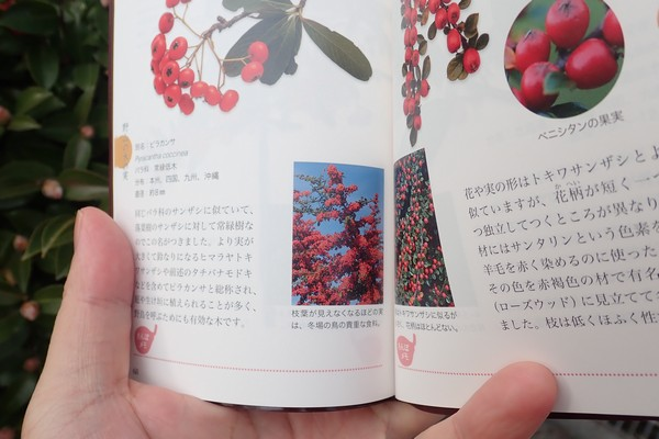 SiSO-LAB☆子どもと一緒に!ポケット版 木の実さんぽ手帳。木の実を観察。常盤山査子かな?