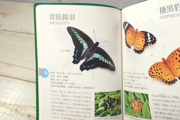 SiSO-LAB☆文庫簿サイズのポケット図鑑、昆虫さんぽ手帖。みやすい写真。