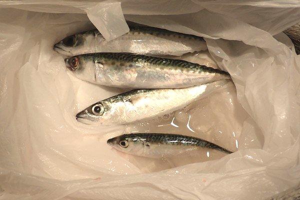 SiSO-LAB☆釣り。小魚は氷締め。でも直接氷をあてると味が落ちる。