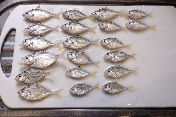 SiSO-LAB☆釣・今日の釣果。アイゴ、メジナ、イワシ、サッパ、ヒイラギ。