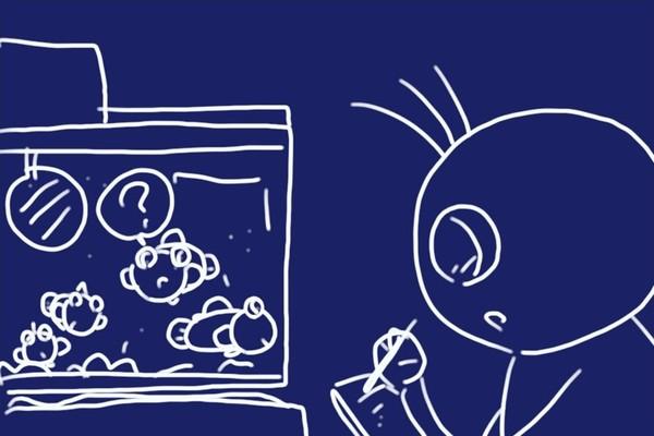 SiSO-LAB☆ハゼ釣り、釣ったハゼを飼ってみて習性観察。