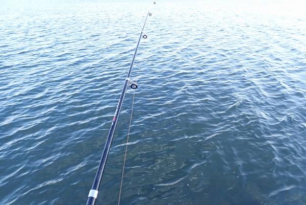 SiSO-LAB☆ハゼ釣り、ハゼを飼って釣りに応用できる習性を観察&考察。