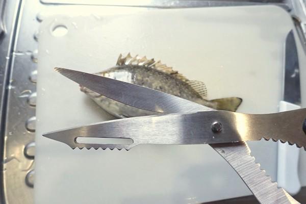 SiSO-LAB☆釣。アイゴのさばき方。毒針に注意。キッチンバサミで切り落とそう。