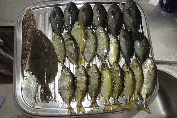 SiSO-LAB☆釣・家族のサビキ釣り釣果。
