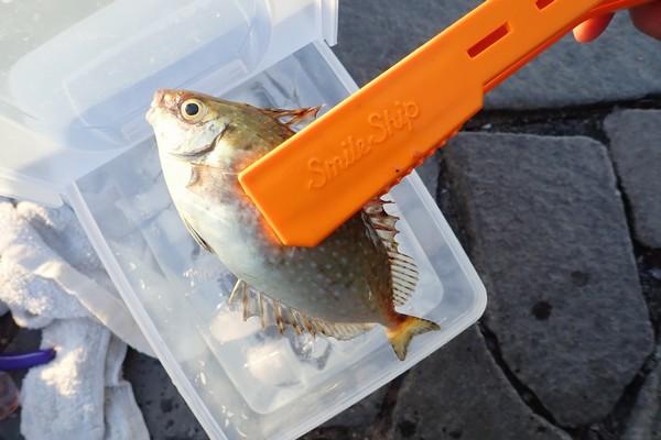 SiSO-LAB☆釣・タカミヤ お魚キャッチ(カーブ)。釣で実際使ってみたよ。