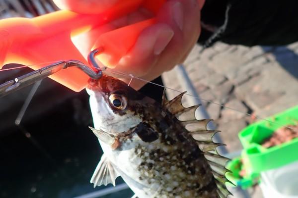 SiSO-LAB☆釣・第一精工 自動針ハズシ 32038。釣りで実際に使ってみたよ。使用レビュー。