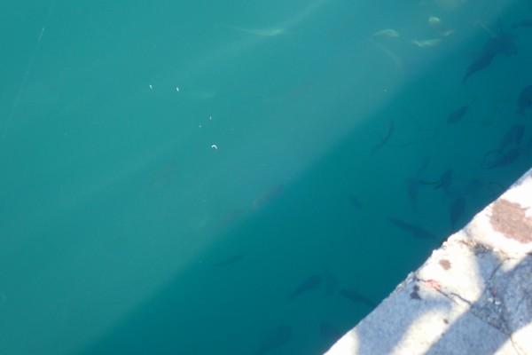 SiSO-LAB☆初春のサビキ釣り、どれくらい釣れるかな?魚はたくさんいるんだけど…。