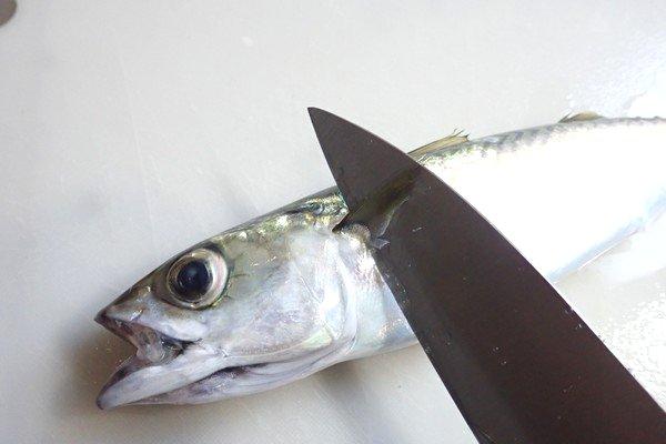 SiSO-LAB☆釣り サバの捌き方。胸ヒレ裏から包丁をいれて頭を落とす。